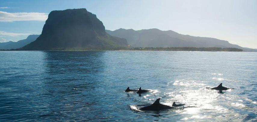 Harris Wilson Full Day Shared Catamaran Cruise on the West Coast + Dolphin Watching