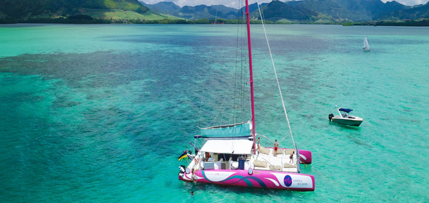 Harris Wilson Full Day Shared Catamaran Cruise on the West Coast + Dolphin Watching