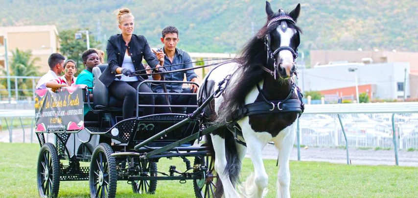 1-Hour Horse Carriage Ride