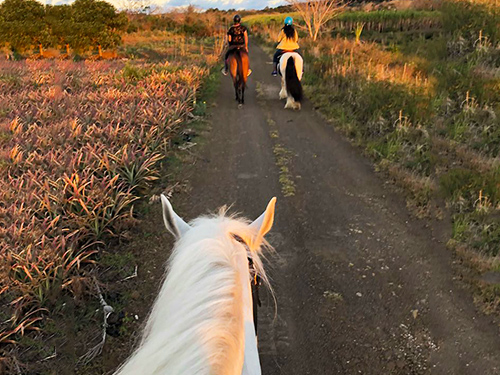 1-Hour Horse Riding in the North