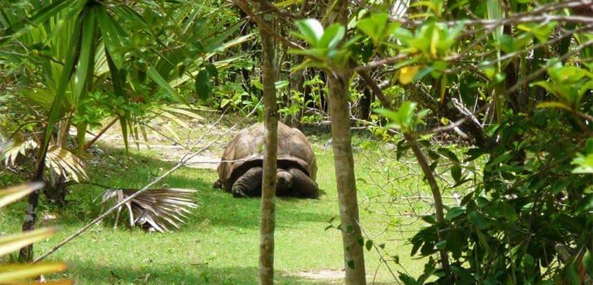 Ile Aux Aigrettes Island – Visit & Tour