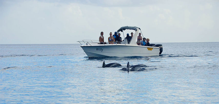 Full Day Dolphin & Benitiers Island trip with BBQ lunch by Speedboat