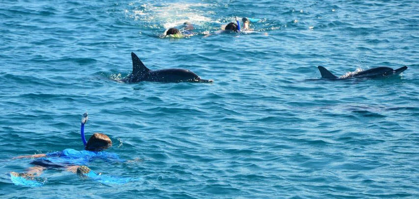 2.5 Hrs Dolphin Encounter – Swim with Dolphins in Tamarin Bay