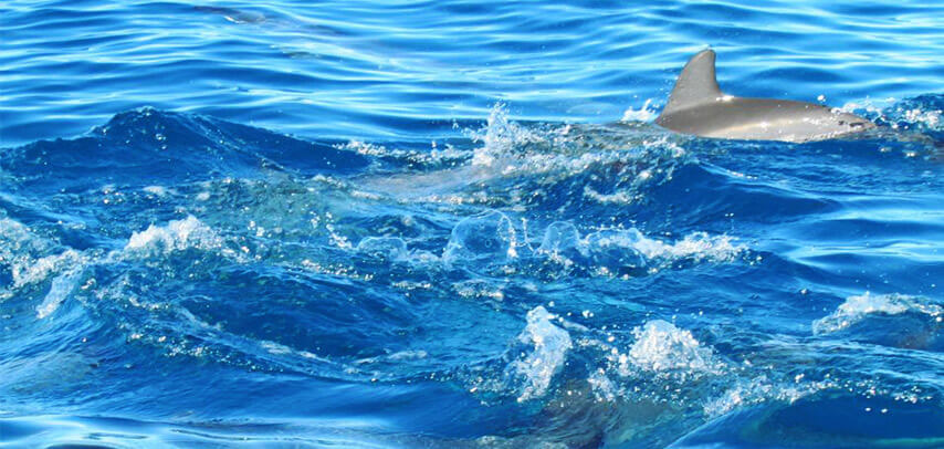 2 Hrs (flash Offer) Dolphin Encounter – Swim With Dolphins In Tamarin Bay