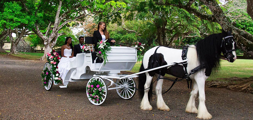 Wedding Horse Carriage Ride
