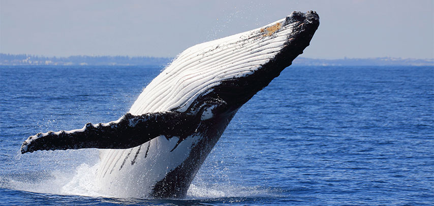 Unforgettable Whale Watching Experience