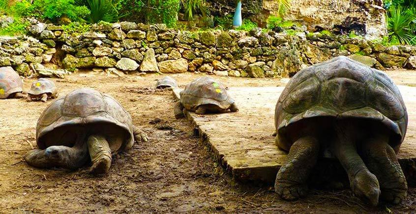 The Francois Leguat Giant Tortoise Reserve (Rodrigues)