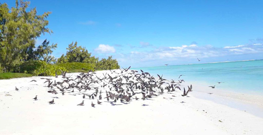 Full Day Trip to Ile aux Cocos with BBQ Lunch
