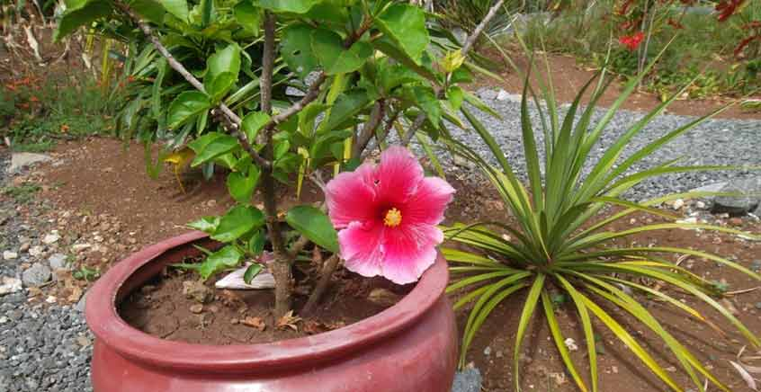 Guided Visit to Jardin des 5 Sens – Rodrigues